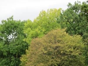 7 London leaves